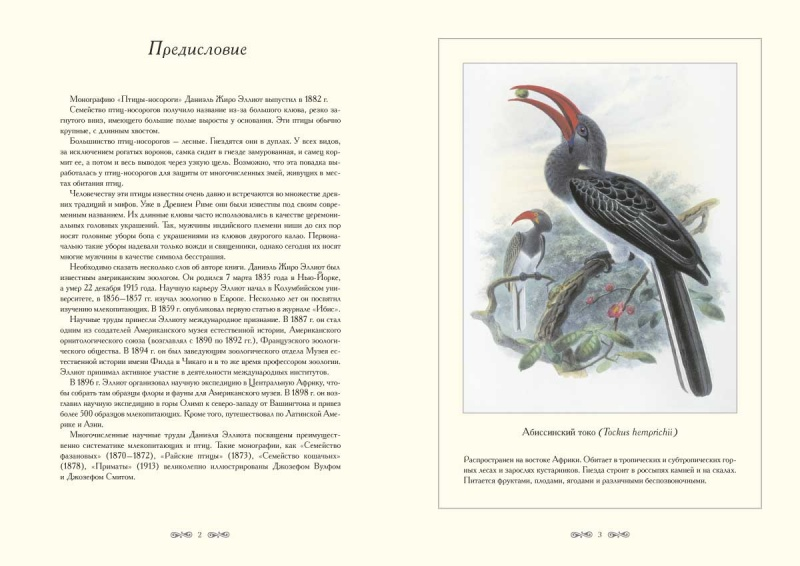 hornbill magazine article Magazine article unesco courier the hornbill's quest  read preview magazine article unesco courier the hornbill's quest  by sulang, kusni.