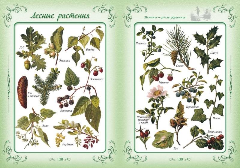 пробил название растений с картинками лесных главное надо помнить